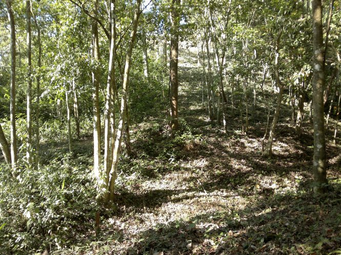 Looking up toward the upper end of the lot. The undergrowth on this portion had recently been chopped.